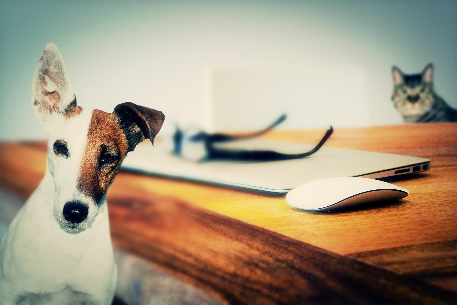 Pet Addendum Ebook